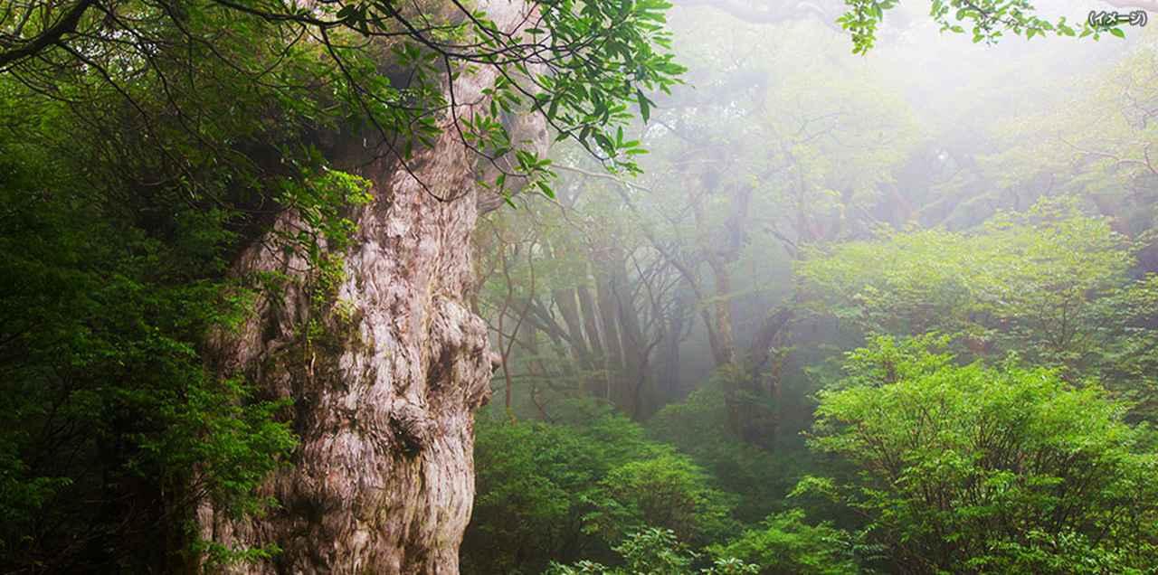 画像: 縄文杉にであい隊ツアー・旅行 あるく国内 クラブツーリズム