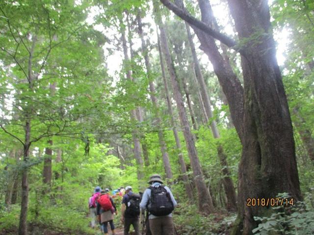画像2: 【山旅会】陣馬山ツアーにいってまいりました!