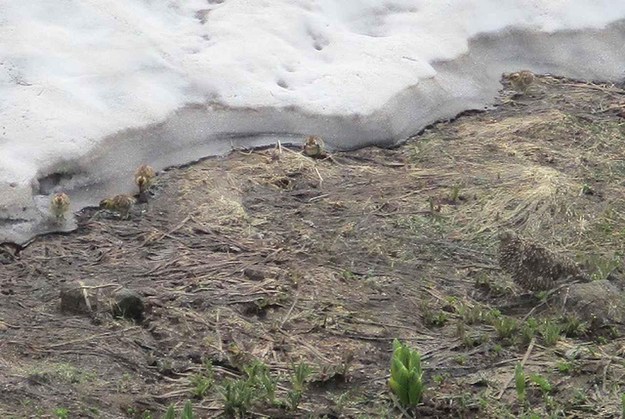 画像15: 【山旅会】立山別山の下見にいってまいりました!