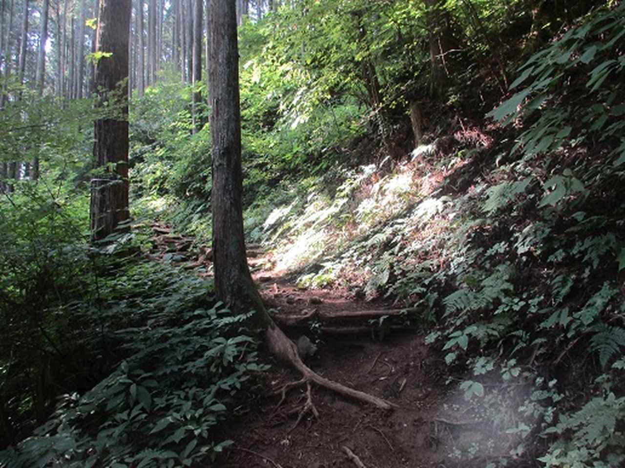 画像3: 【山旅会】大塚山の下見にいってまいりました!