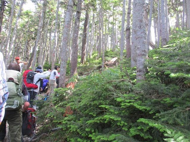 画像7: 【山旅会】蝶ヶ岳ツアーにいってまいりました!(その2)