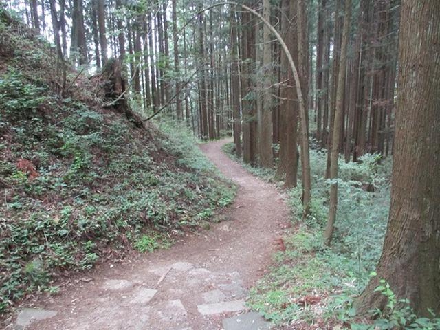 画像4: 【山旅会】日の出山から吉野梅郷
