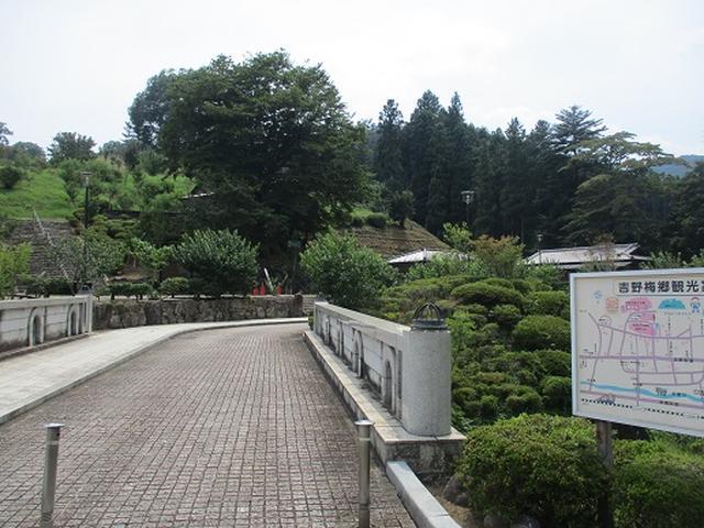 画像12: 【山旅会】日の出山から吉野梅郷