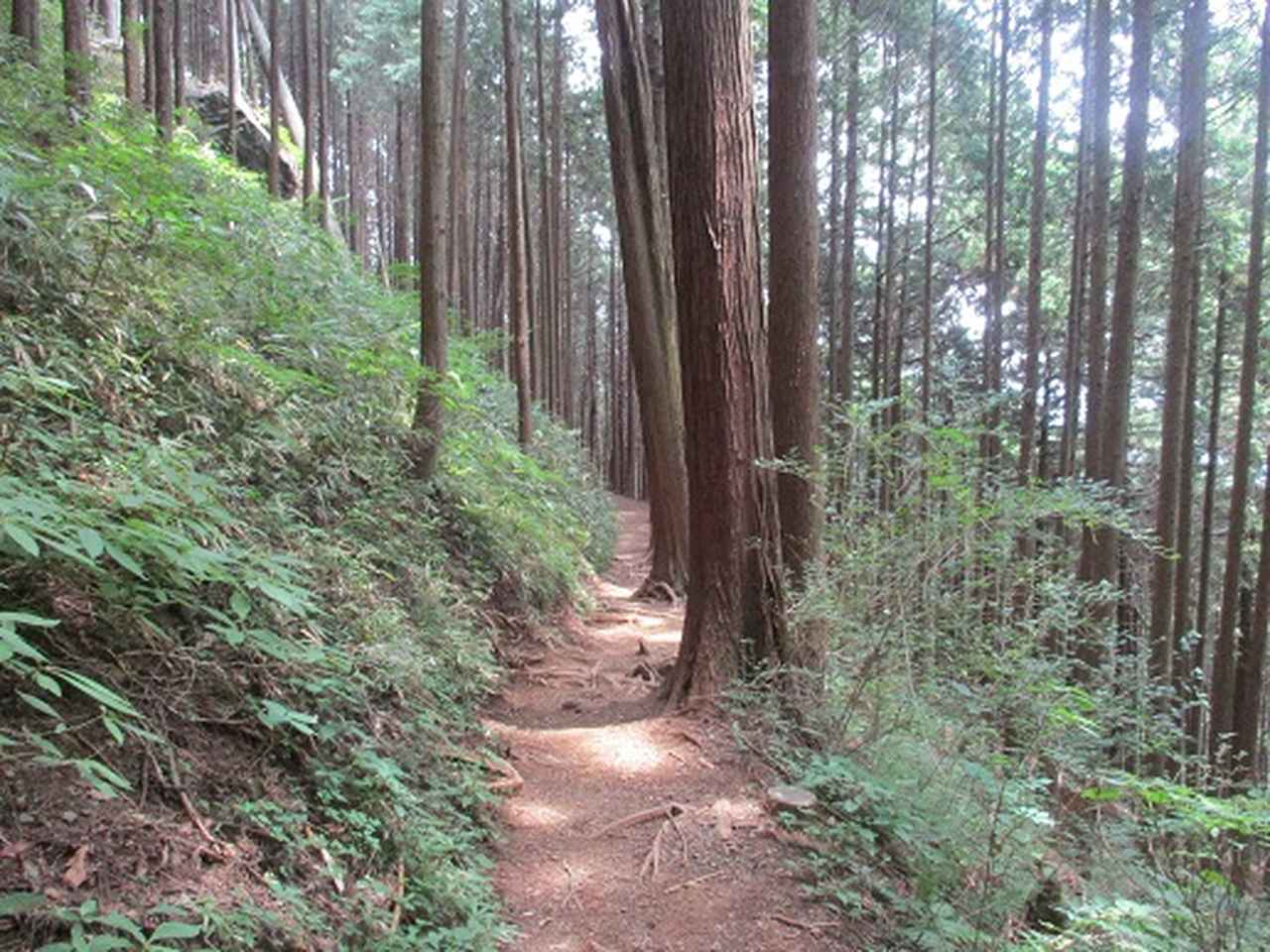 画像9: 【山旅会】日の出山から吉野梅郷