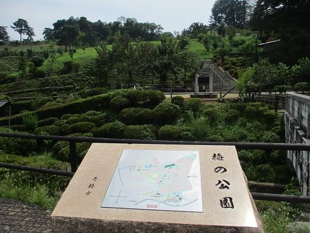 画像13: 【山旅会】日の出山から吉野梅郷