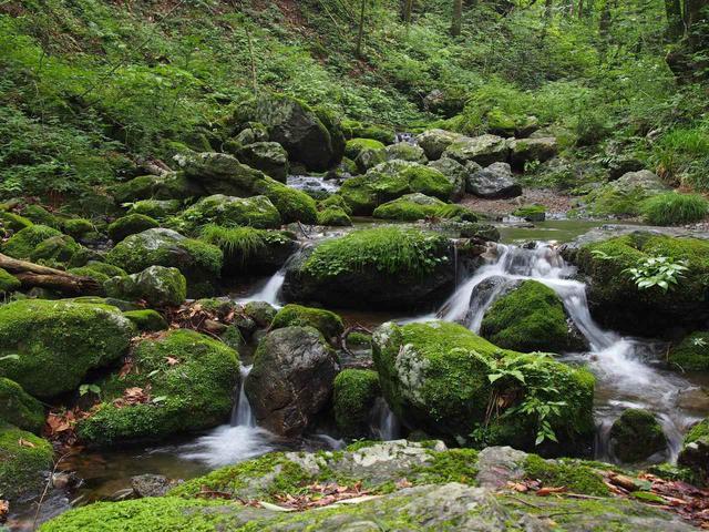 画像: 奥多摩・御岳山のロックガーデン(イメージ)