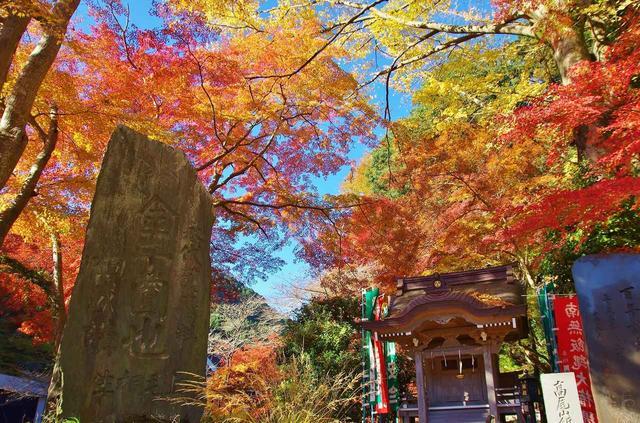 画像: 高尾山の紅葉(イメージ)