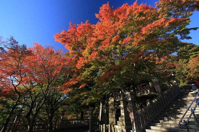 画像: 大山の紅葉(イメージ)