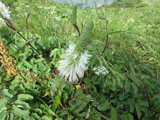 画像8: 【山旅会】至仏山の下見にいってまいりました!