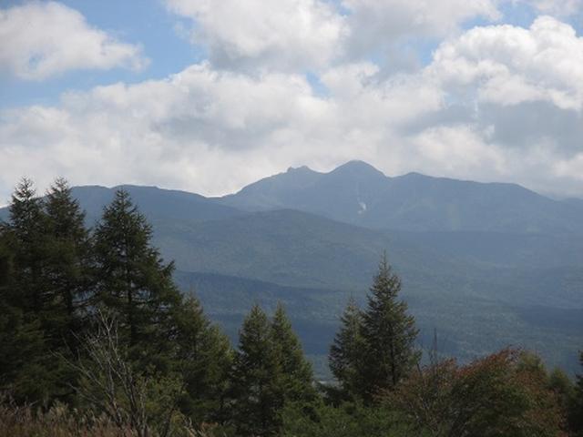 画像4: 【山旅会・登山ガイドこだわりツアー】初秋の花咲く八子ヶ峰ツアーのご案内