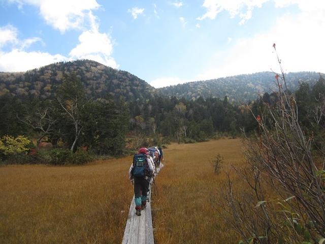 画像7: 【山旅会・登山ガイドこだわりツアー】岡田ガイドからの便り・尾瀬燧裏林道ツアーのご案内