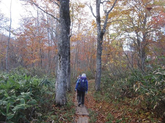 画像5: 【山旅会・登山ガイドこだわりツアー】岡田ガイドからの便り・尾瀬燧裏林道ツアーのご案内