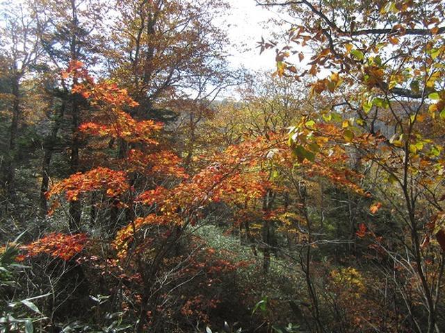 画像2: 【山旅会・登山ガイドこだわりツアー】岡田ガイドからの便り・尾瀬燧裏林道ツアーのご案内