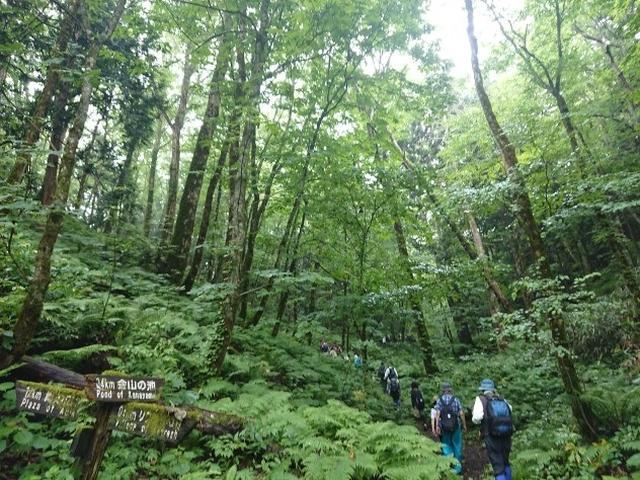 画像7: 【山旅会】白神山地にいってまいりました!