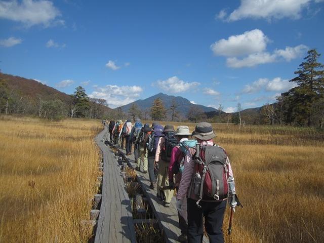 画像3: 【山旅会・登山ガイドこだわりツアー】岡田ガイドからの便り・尾瀬燧裏林道ツアーのご案内