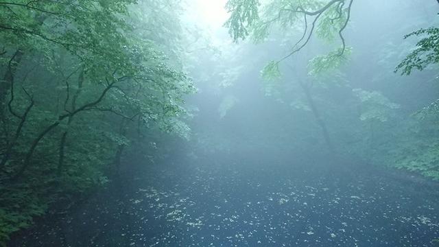 画像2: 【山旅会】白神山地にいってまいりました!