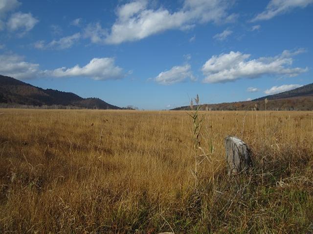 画像4: 【山旅会・登山ガイドこだわりツアー】岡田ガイドからの便り・尾瀬燧裏林道ツアーのご案内