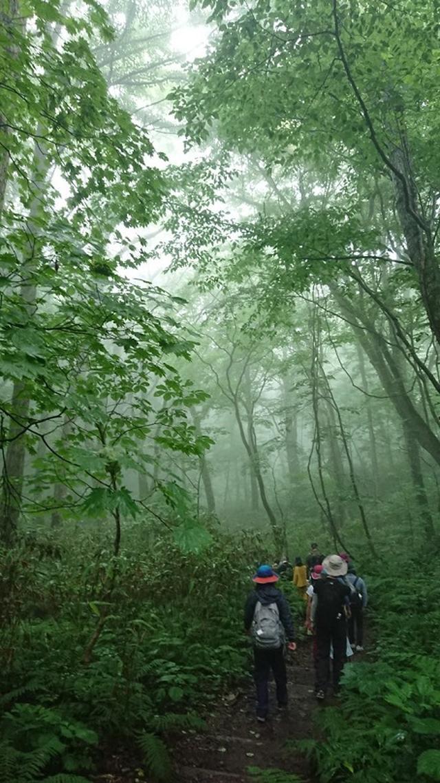 画像3: 【山旅会】白神山地にいってまいりました!