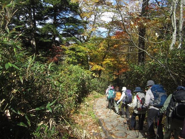 画像1: 【山旅会・登山ガイドこだわりツアー】岡田ガイドからの便り・尾瀬燧裏林道ツアーのご案内