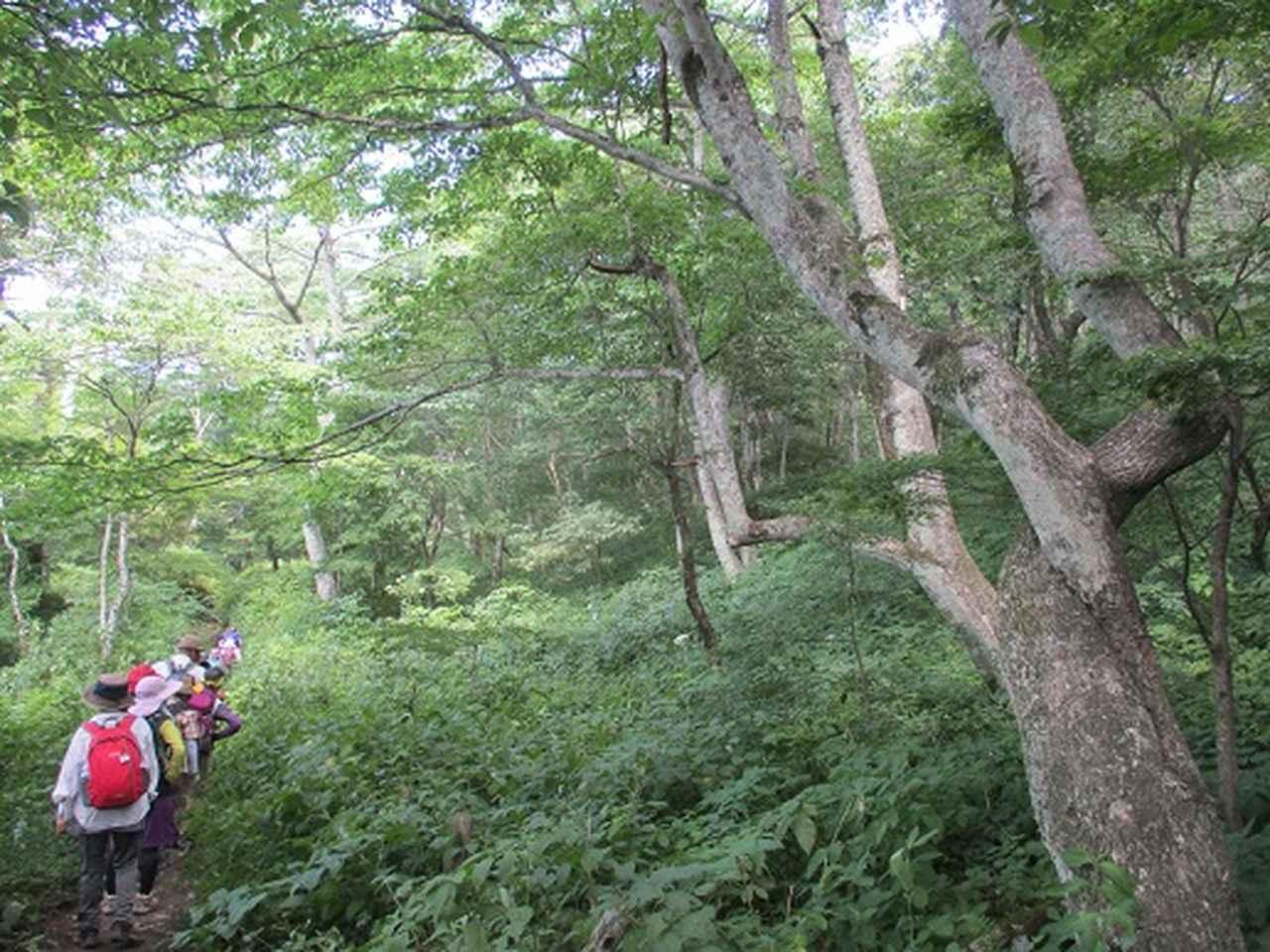 画像16: 【山旅会・登山ガイドこだわりツアー】添乗員からの便り・榛名ハイキングにいってまいりました!