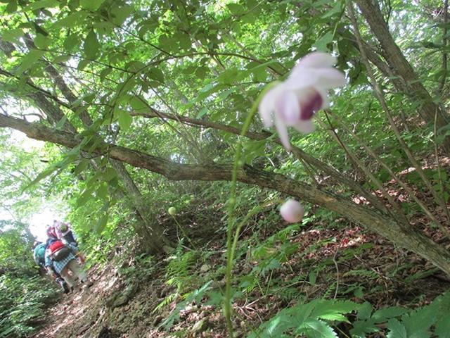 画像3: 【山旅会・登山ガイドこだわりツアー】添乗員からの便り・榛名ハイキングにいってまいりました!