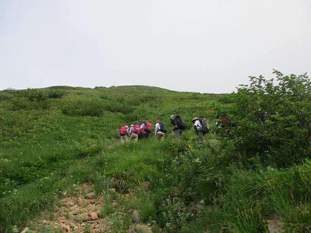 画像5: 【山旅会・登山ガイドこだわりツアー】岡田ガイドからの便り・白山ツアーにいってまいりました!(その2)