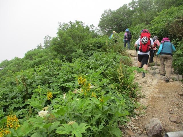 画像7: 【山旅会・登山ガイドこだわりツアー】岡田ガイドからの便り・白山ツアーにいってまいりました!(その1)