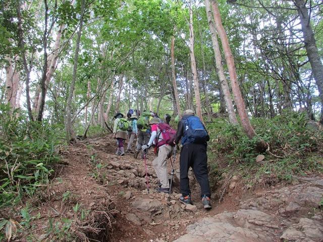 画像13: 【山旅会・登山ガイドこだわりツアー】添乗員からの便り・入笠山ツアーにいってまいりました!(その1)