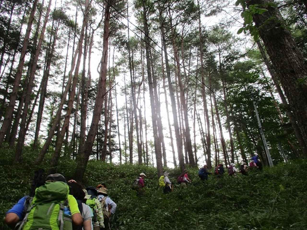画像3: 【山旅会・登山ガイドこだわりツアー】添乗員からの便り・入笠山ツアーにいってまいりました!(その1)
