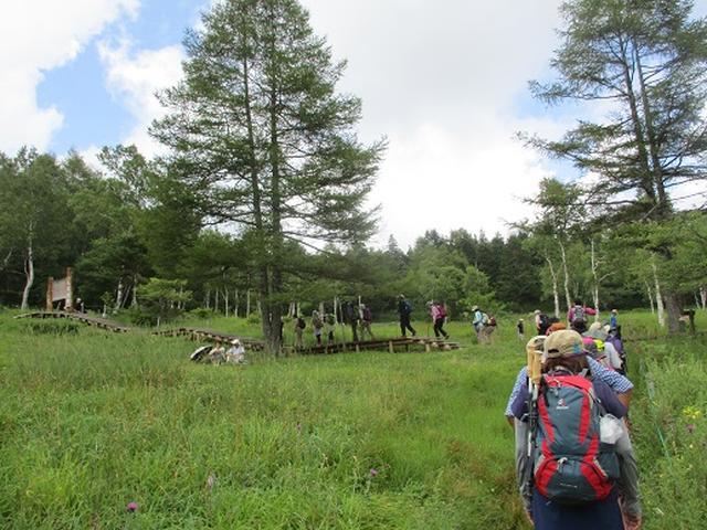 画像7: 【山旅会・登山ガイドこだわりツアー】添乗員からの便り・入笠山ツアーにいってまいりました!(その1)