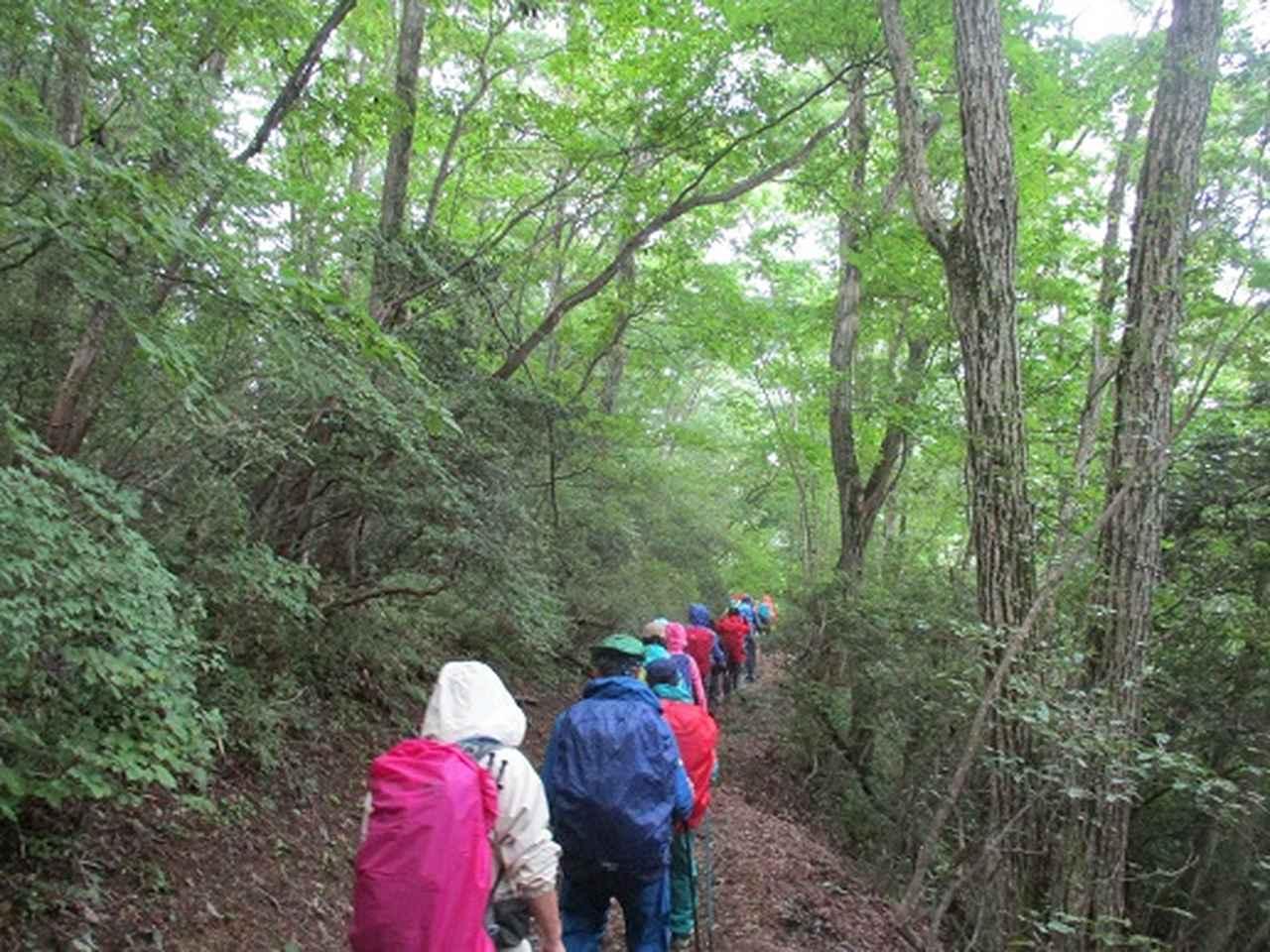 画像2: 【山旅会・登山ガイドこだわりツアー】添乗員からの便り・大塚山にいってまいりました!(その2)