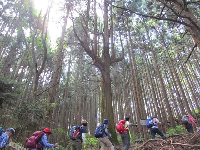 画像7: 【山旅会・登山ガイドこだわりツアー】添乗員からの便り・大塚山にいってまいりました!(その1)