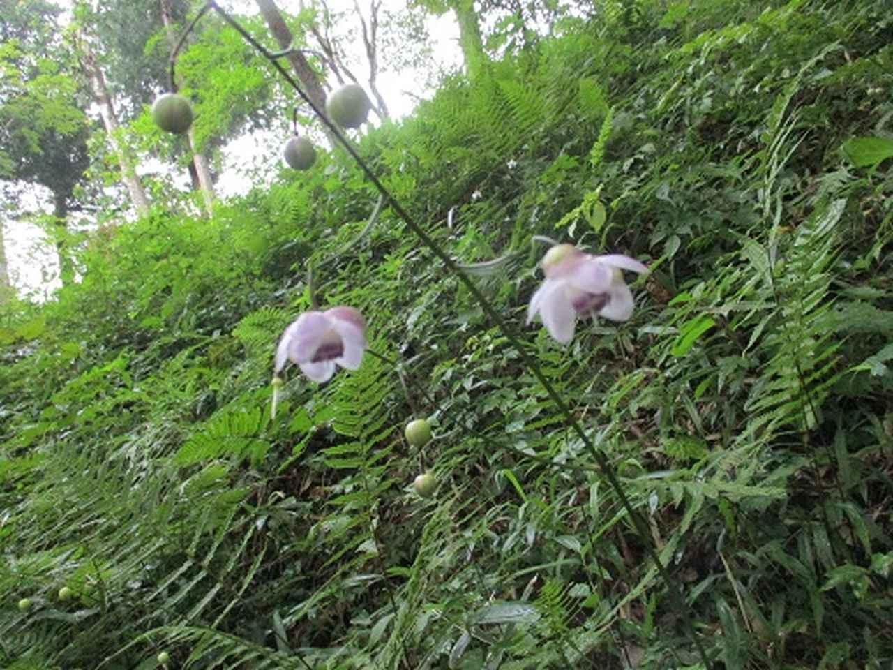 画像10: 【山旅会・登山ガイドこだわりツアー】添乗員からの便り・大塚山にいってまいりました!(その2)
