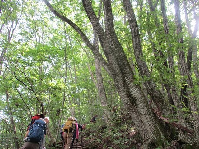 画像8: 【山旅会・登山ガイドこだわりツアー】添乗員からの便り・大塚山にいってまいりました!(その1)