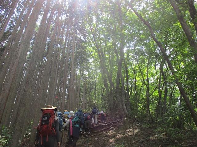 画像9: 【山旅会・登山ガイドこだわりツアー】添乗員からの便り・大塚山にいってまいりました!(その1)