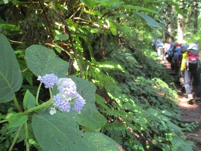 画像4: 【山旅会・登山ガイドこだわりツアー】添乗員からの便り・大塚山にいってまいりました!(その1)