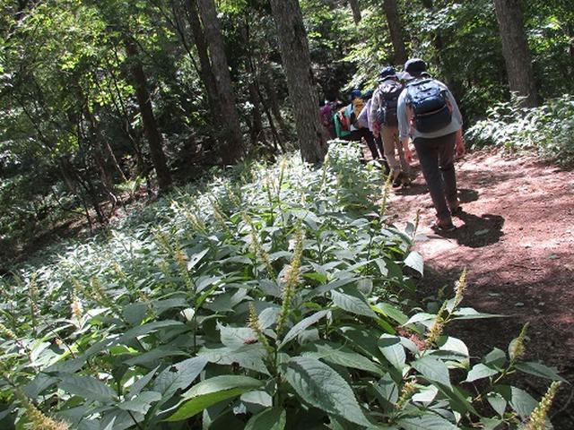 画像1: 【山旅会・登山ガイドこだわりツアー】添乗員からの便り・三つ峠にいってまいりました!(その1)