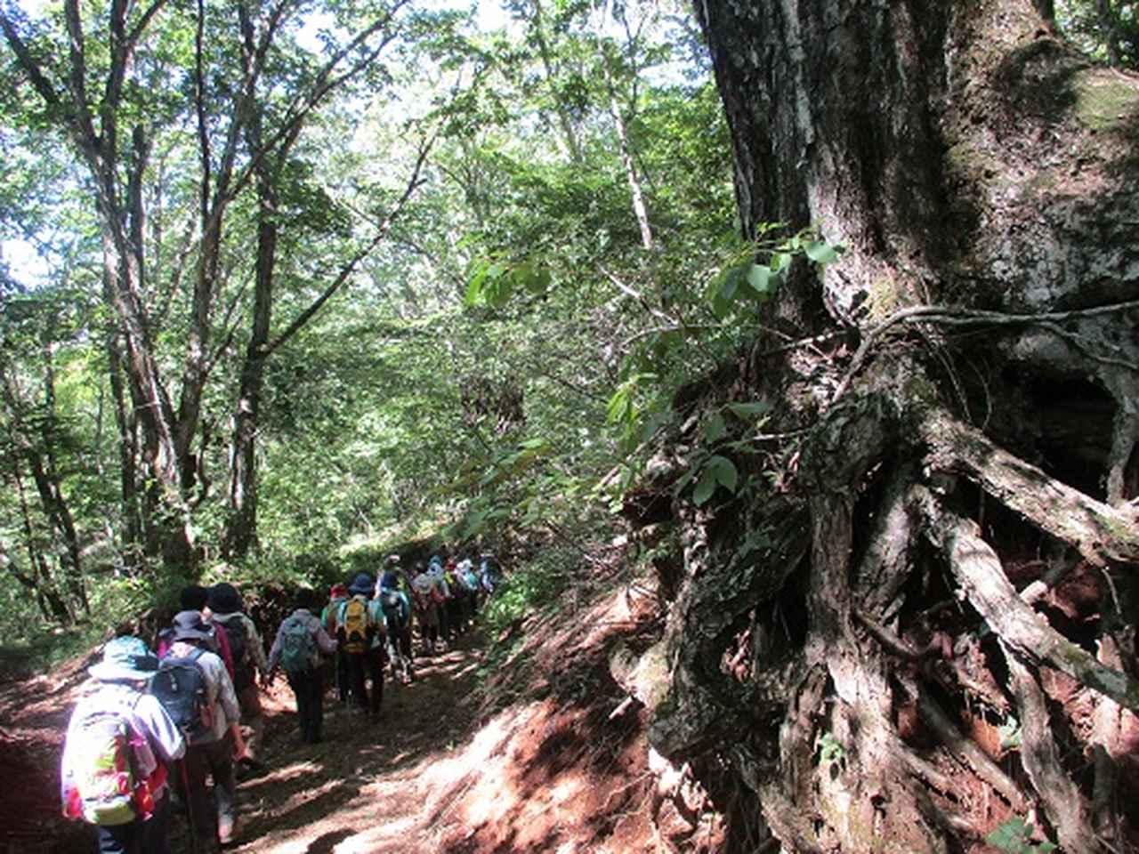 画像13: 【山旅会・登山ガイドこだわりツアー】添乗員からの便り・三つ峠にいってまいりました!(その2)