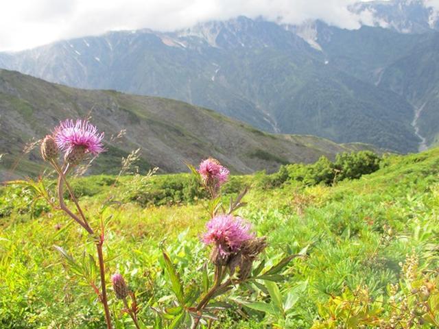 画像1: 【山旅会・登山ガイドこだわりツアー】添乗員からの便り・唐松岳ツアーにいってまいりました!(その2)