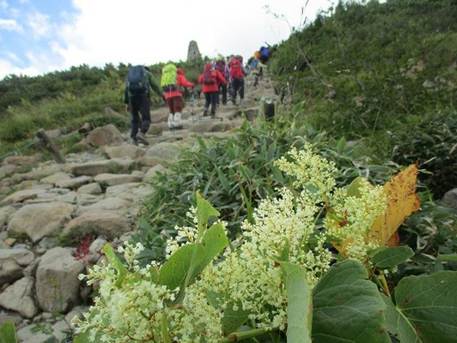 画像8: 【山旅会・登山ガイドこだわりツアー】添乗員からの便り・唐松岳ツアーにいってまいりました!(その2)