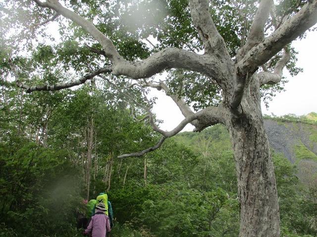 画像2: 【山旅会・登山ガイドこだわりツアー】添乗員からの便り・唐松岳ツアーにいってまいりました!(その3)