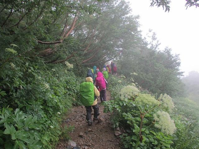 画像4: 【山旅会・登山ガイドこだわりツアー】添乗員からの便り・唐松岳ツアーにいってまいりました!(その5)