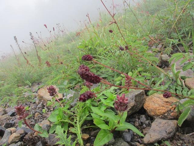 画像5: 【山旅会・登山ガイドこだわりツアー】添乗員からの便り・唐松岳ツアーにいってまいりました!(その5)