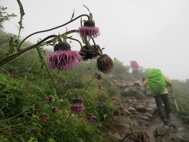 画像6: 【山旅会・登山ガイドこだわりツアー】添乗員からの便り・唐松岳ツアーにいってまいりました!(その5)
