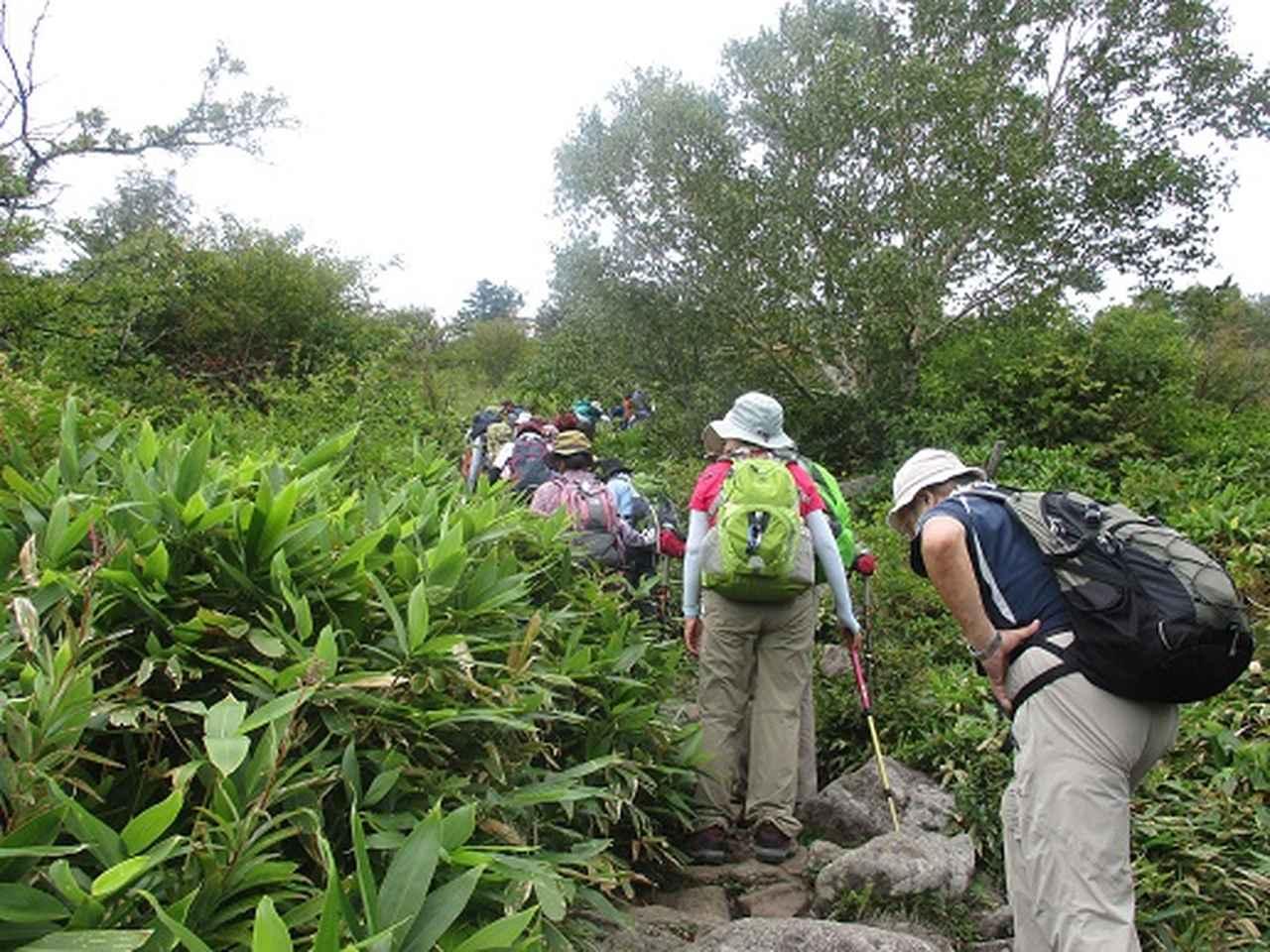 画像6: 【山旅会・登山ガイドこだわりツアー】岡田ガイドからの便り・湯の丸山ツアーにいってまいりました!