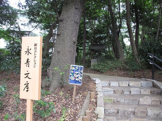 画像15: 【山旅会・登山ガイドこだわりツアー】岡田ガイドからの便り・都内の山の下見にいってまいりました!