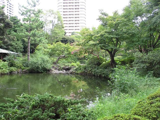 画像12: 【山旅会・登山ガイドこだわりツアー】岡田ガイドからの便り・都内の山の下見にいってまいりました!