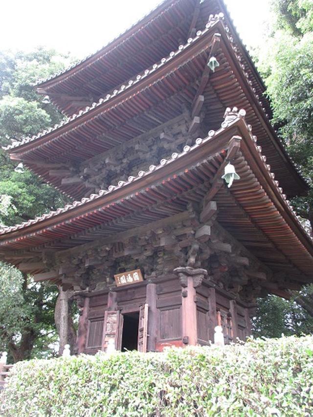 画像17: 【山旅会・登山ガイドこだわりツアー】岡田ガイドからの便り・都内の山の下見にいってまいりました!