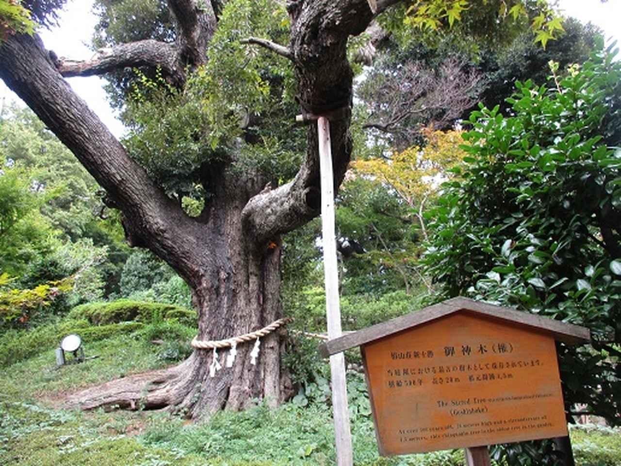 画像16: 【山旅会・登山ガイドこだわりツアー】岡田ガイドからの便り・都内の山の下見にいってまいりました!