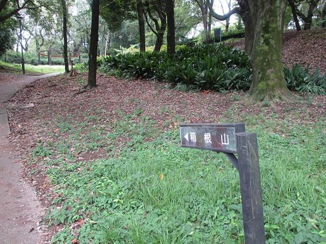 画像4: 【山旅会・登山ガイドこだわりツアー】岡田ガイドからの便り・都内の山の下見にいってまいりました!